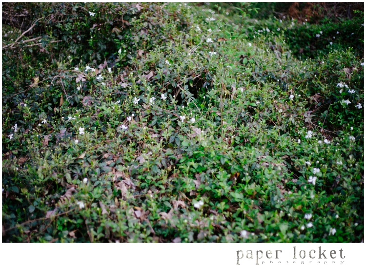 Jesse H Jones / Houston TX / Wedding Photographers / Moss / Spring / Paper Locket Photography / Nature